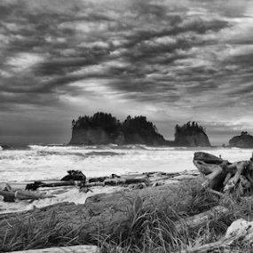 Neah Bay by Kati Garner - Black & White Landscapes ( stormy, driftwood, waves, pacific ocean, rocks )
