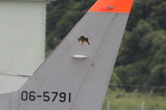 Photo: 三沢基地からのT-4 外来機