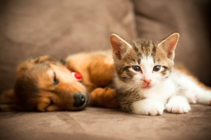 Zwierzęta w domu