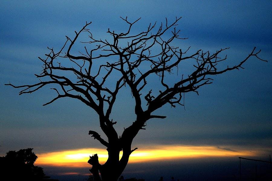 Godhuli... by Rongin Manush - Nature Up Close Trees & Bushes (  )