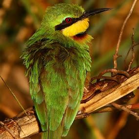 by Gareth Carter - Animals Birds