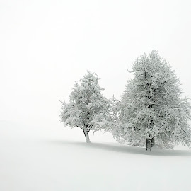 winter by Bojan Berce - Uncategorized All Uncategorized (  )
