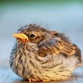 Cute Baby Birds Wallpapers