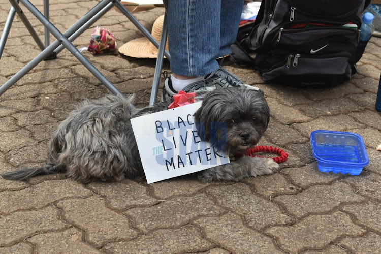 A pet dog outside the US Embassy in Nairobi on June 9, 2020