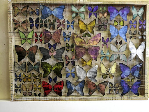 Rautenbach's butterflies. Picture: SUPPLIED