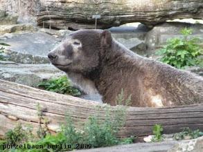 Photo: Marmorbaerchen Knut in der Schlafkuhle ;-)