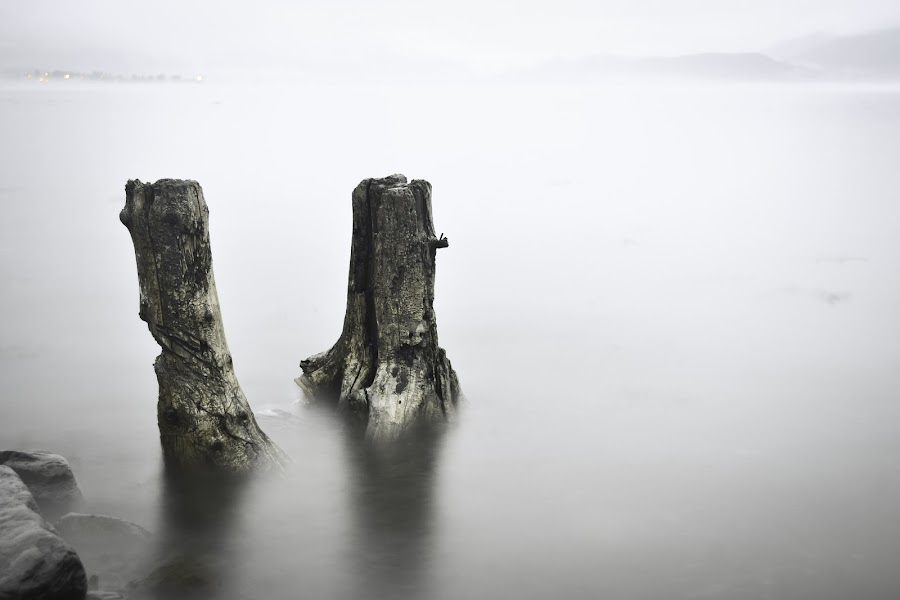 Pewter Water by Mary-Kate Prather - Landscapes Waterscapes ( dead trees, alaska, seward, long exposure, stumps,  )