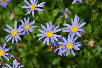 久米谷さんのご自宅を飾る花