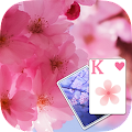 Solitaire Pink Blossom Theme APK