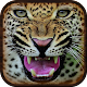 Cheetah Hunter 2015 Simulator