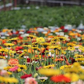flowerss.JPG