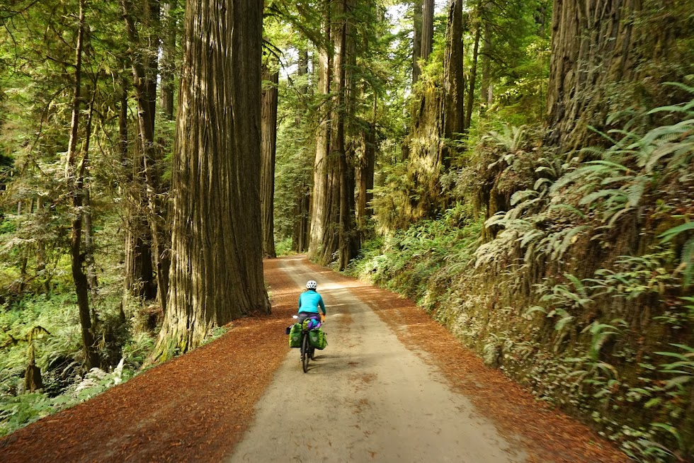 A quiet ride among the giants - Jedidiah Smith State Park, California