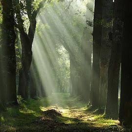 Mystic forest  by Gert de Vos - Landscapes Forests