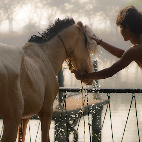 Sick by Donny Novianus - Animals Horses