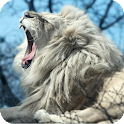White Lion Pack 2 Wallpaper icon