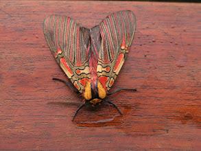 Photo: Same moth.