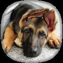German Shepherd Wallpapers icon