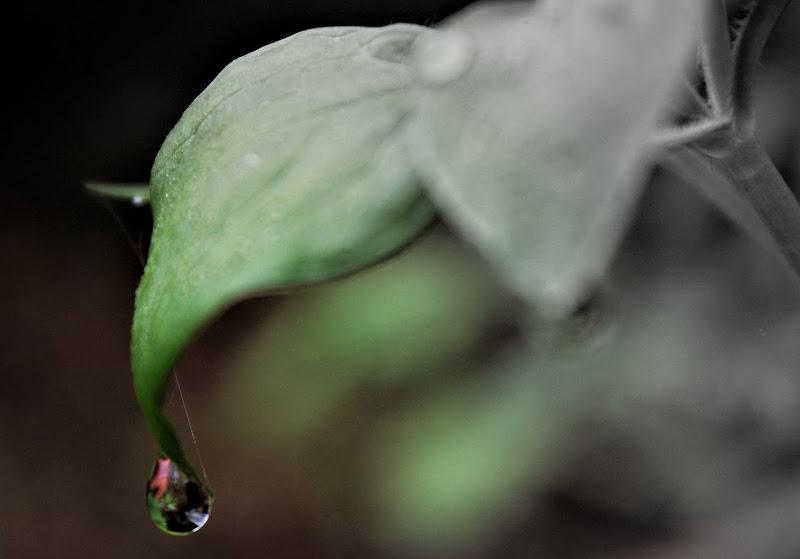 gocce..verdi di ilaria manente