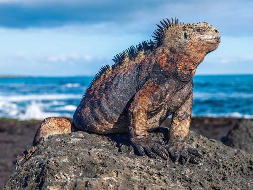 An iguana enjoys the midday sun during a shore excursion on Celebrity Xpedition.