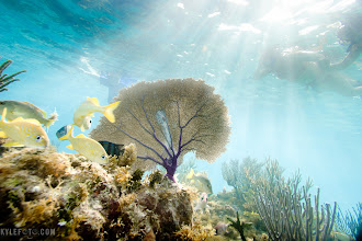Photo: Sea fan sun rays Cayman Islands, Caribbean From the blog http://www.kylefoto.com  I can't get over how awesome this little underwater world is! The sun rays are beautiful, the colourful fish help anchor the shot, but what speaks to me about this photo is the inclusion of these people here: If you can snorkle, you can get these shots, just like I did. You can invest in an underwater housing from $300 up to some onholy amount, but I want you to know a shot like this is not beyond your reach!  Photographic Details: Ewa Marine housing, Shutter priority mode Canon 20D 1/250s f/5.6 ISO100 12mm (35mm eq:19.2mm)
