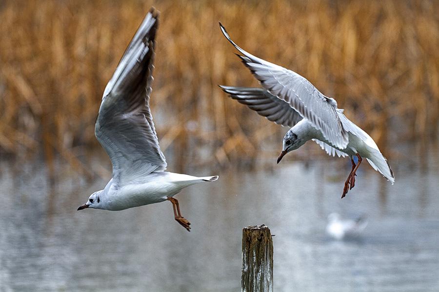 fight for destination by Kadek Lana - Animals Birds ( pwctaggedbirds )