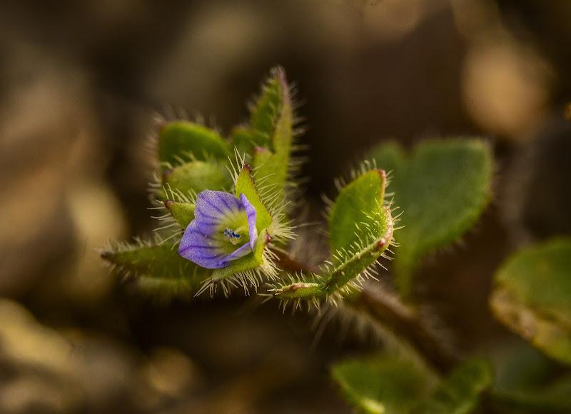 """La natura """"riprende vita"""" di Nuriger"""