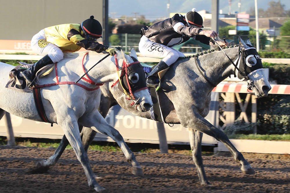 CORAZÓN MINERO (14ª Carrera) - Soc. Hipódromo Chile S.A.