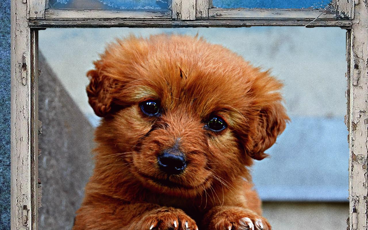 Anak Anjing Kertas Dinding Apl Android Di Google Play