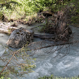 Flims, Multeg, Graubünden, Switzerland by Serguei Ouklonski - Nature Up Close Water ( forest, tourism, scenic, freshness, branch, trees, summer, rock, stream, flowing water, wood, day, flow, scenics, no person, graubunden, motion, rapids, alp, nature, switzerland, wet, tree, hiking, beauty in nature, water, stone, environment, outdoors, natural object, geological formation, valley, tranquility, river, travel, splash, no people, landscape, nature landscape )