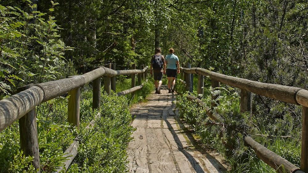 Zwei Wanderer laufen über einen Holzbohlenweg durch das Wildsee Moor am Sommerberg