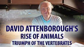David Attenborough's Rise of Animals: Triumph of the Vertebrates thumbnail