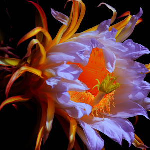 dragon flower #356.jpg