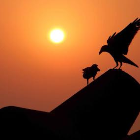 by Avishek Mazumder - Animals Birds