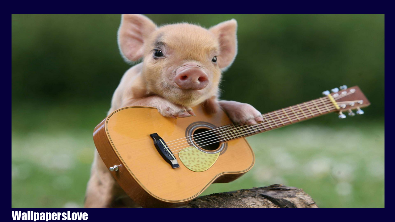 little pig live wallpaper android apps on google play