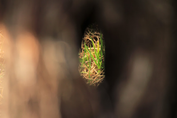 Spiando attraverso una crepe di un ramo di Bibanto