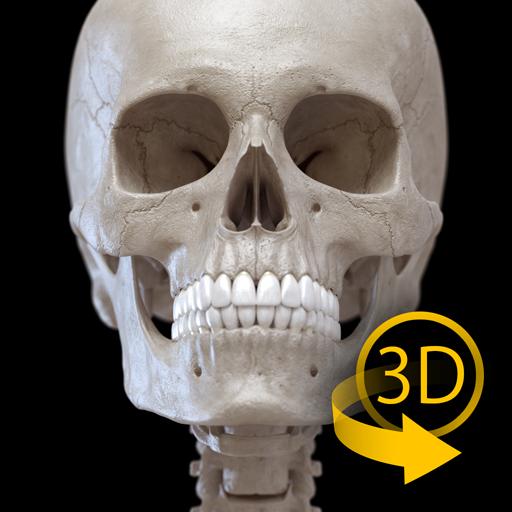 Skeleton | 3D Anatomy (app)