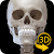 Skeleton | 3D Anatomy file APK for Gaming PC/PS3/PS4 Smart TV
