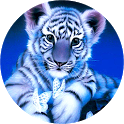Blue Tiger Live Wallpaper icon