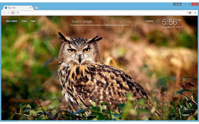 Owl wallpaper hd new tab owls themes chrome web store voltagebd Images