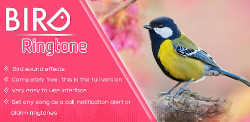 bird ringtone message tone