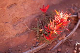 Photo: Fireweed - on the side of the trail.