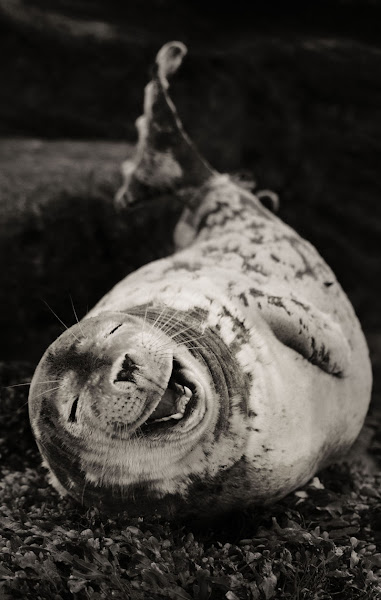 Photo: Flipper, the laughing seal