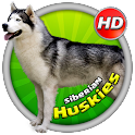Siberian Huskies Wallpaper HD icon
