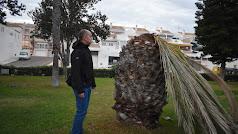 Yakubiuk junto a una palmera afectada.