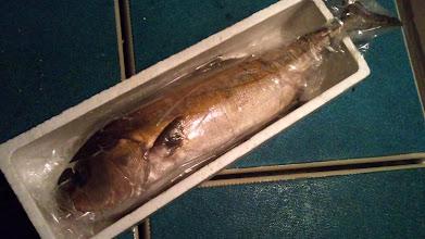 Photo: 知り合いの宴会用にお使いください!という事でお寿司屋さんに旅立ちました。 うちで販売している一番デカい発泡BOXに入れてます。 長さは110cmありました。 あはは。