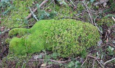 Photo: Moss Creature, sleeping face down.