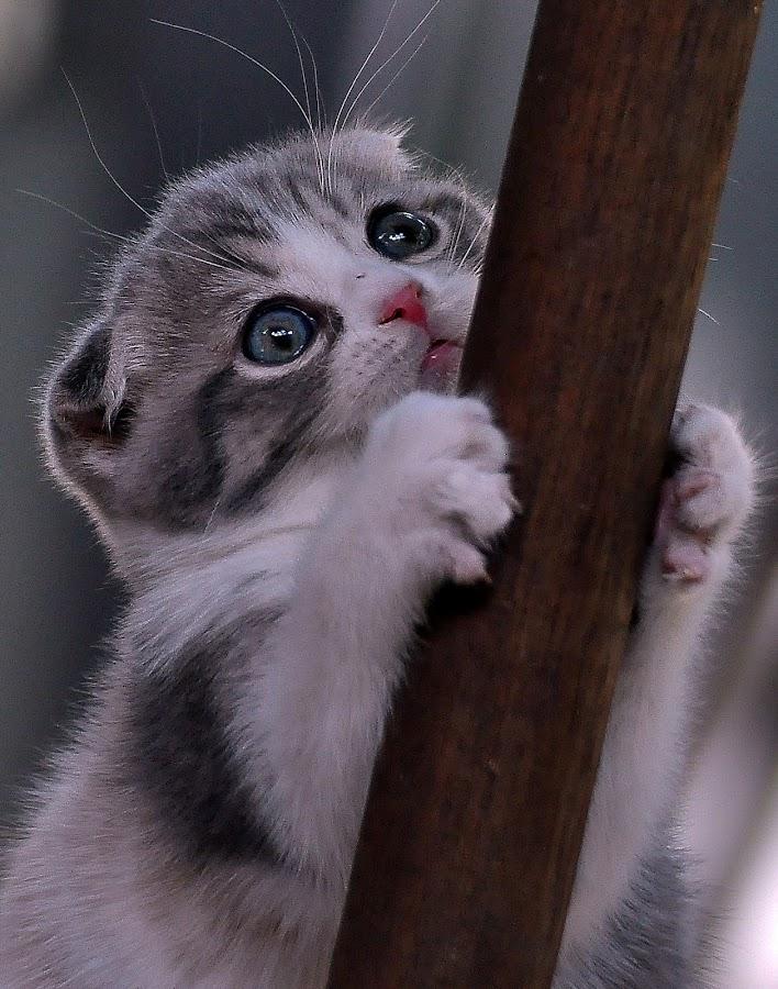 by Fernandi Eko Prasetyo - Animals - Cats Playing