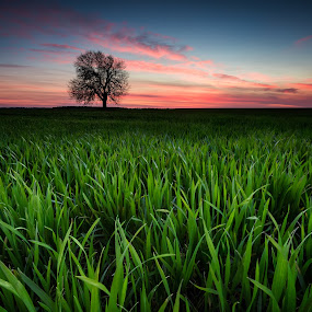 Alone in the field by Evgeni Ivanov - Landscapes Prairies, Meadows & Fields ( horizon over land, mystery, purple, grass, green, twilight, cloudscape, beauty, scenic, dramatic sky, landscape, spring, field, sky, tree, nature, blue, sunset, background, dark, moody sky, cloud, night, evening, lonely, bulgaria )