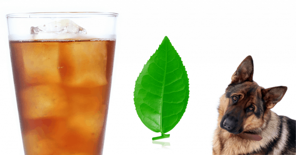 german shepherd with iced tea and tea leaf