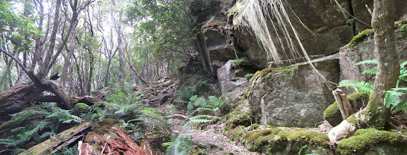 Photo: The beautiful forest to walk through on the Tasman Coastal Trail